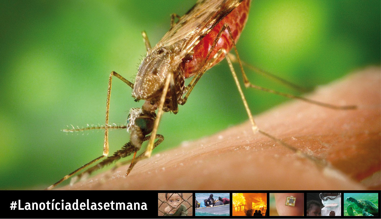 La importància de combatre la malària