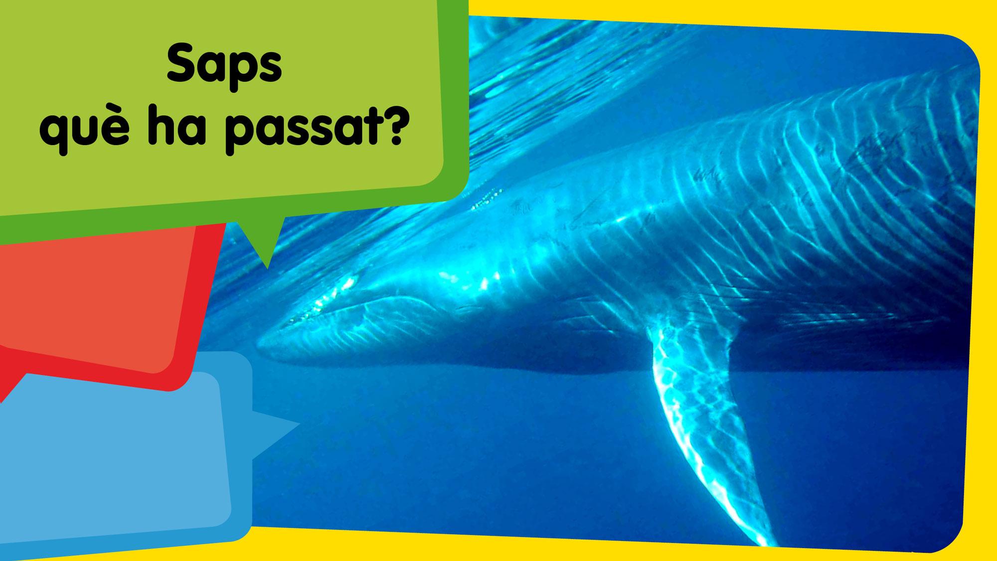 Una balena escup un submarinista